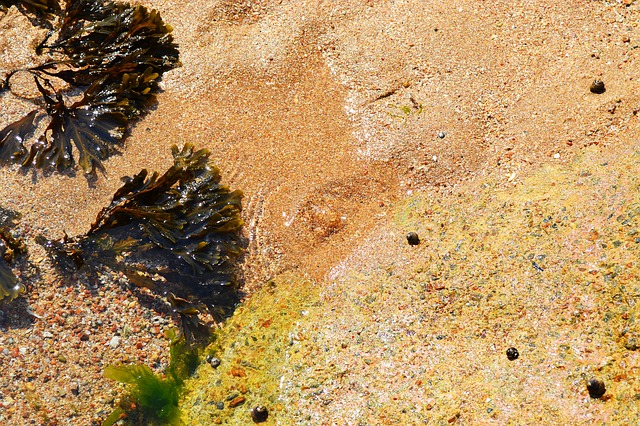 chaluhy na pláži
